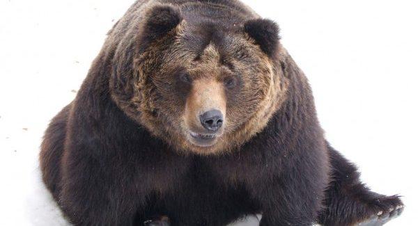 夢占いで未来を予測!『熊の夢』絶対に気をつける6つの事