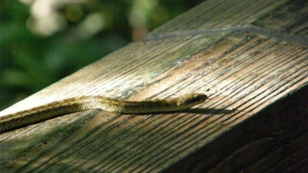夢占いで未来を予測!『蛇の夢』絶対に気を付ける7つの事