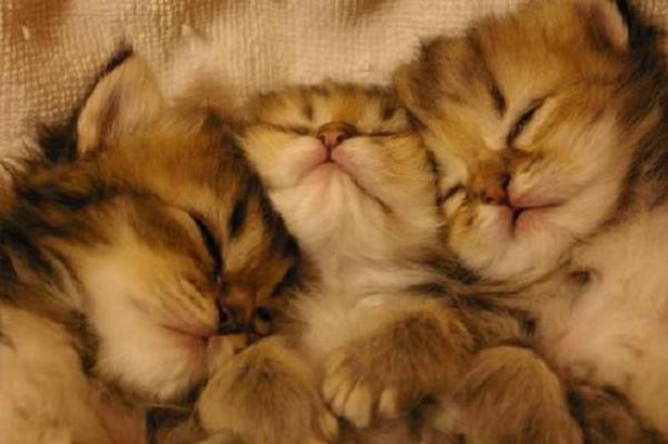 夢占いであなたの未来が見える!『猫の夢』から学ぶ7つの事