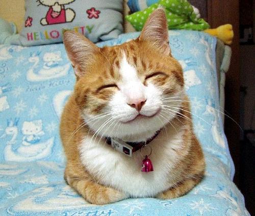 夢占いで分かる!『猫』の夢が暗示する7つの事
