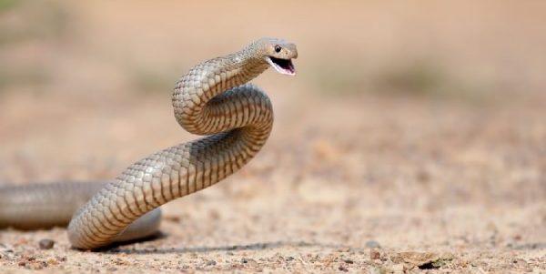 夢占いで未来を予測!『蛇の夢』絶対に気を付ける7つの事-2-