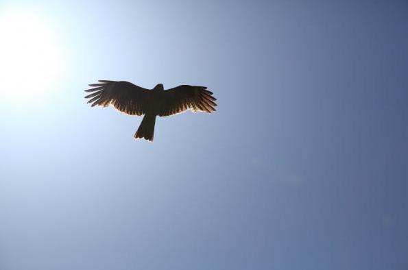 空飛ぶ夢のシュチュエーションで分かる、7つの心理