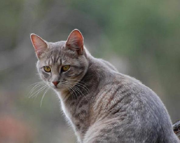 『猫の夢』が教える、貴方の心に隠された7つの深層心理