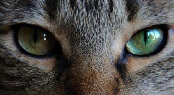 『猫の夢』夢占いでも運を招く?健康状態で知る7つの予兆