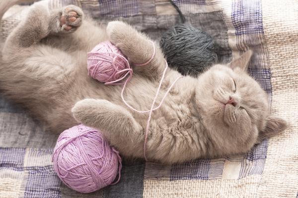 猫の癒しはセラピー並み☆医師も驚く7つのリラックス効果