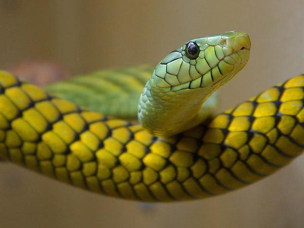 「蛇」の夢占い☆運勢をアップさせる7つのメッセージ