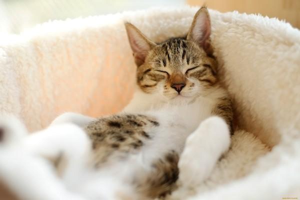猫の夢☆夢占いが教える、あなたが招く7つの出来事