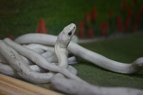 白蛇の夢を見たら宝くじが当たる!?金運に恵まれる5つの鍵