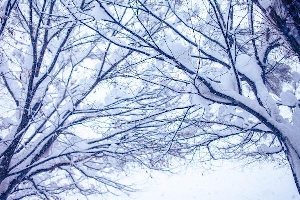 夢占い『雪の夢』は運気アップの兆し!訪れる7つの幸運