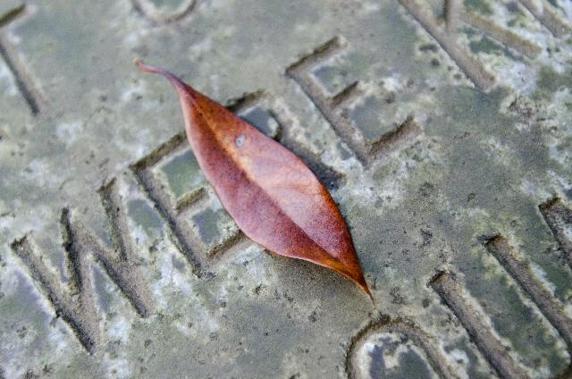 【夢占い】死ぬ夢のポイントは誰が死ぬか。意味を徹底解説