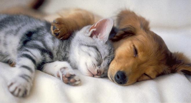 7-2寝顔犬猫