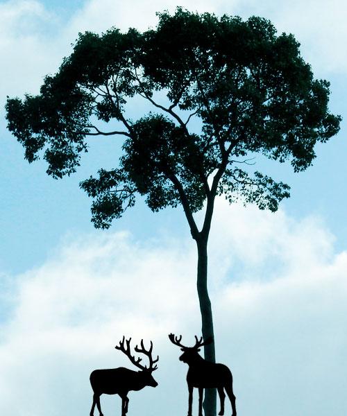 二頭の鹿と一本の木