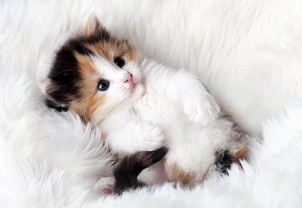 猫が癒しに最高!という女子に共通する7つの心理
