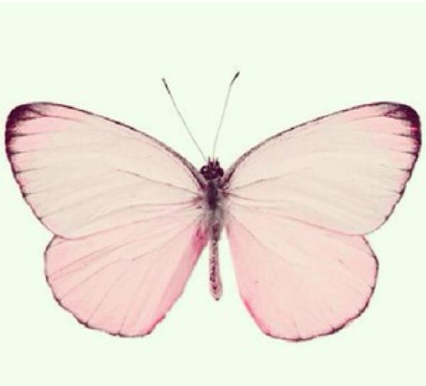 ピンクの蝶々