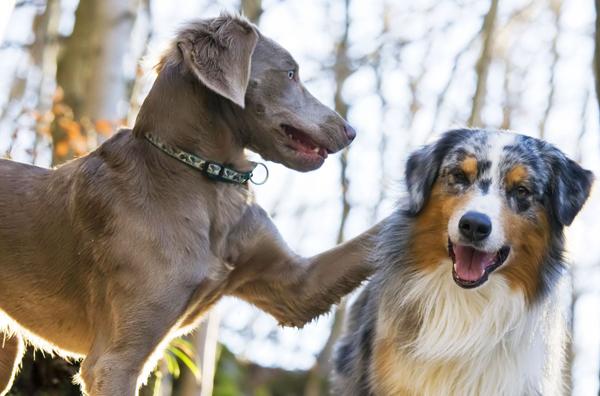 夢占い「犬」の色・種類で教えてくれる7つのメッセージ☆