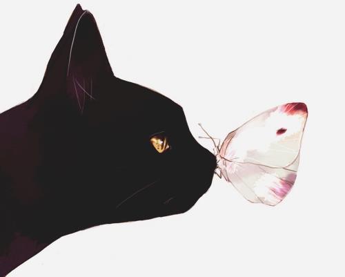 黒い猫と蝶の画像