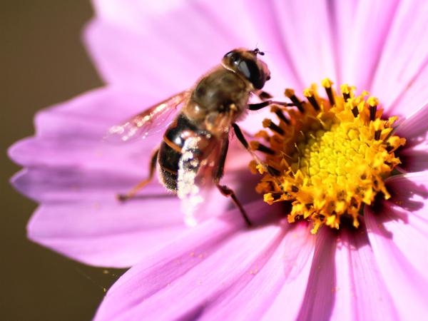 【夢占い】蜂に刺された夢が伝えるあなたへのメッセージ