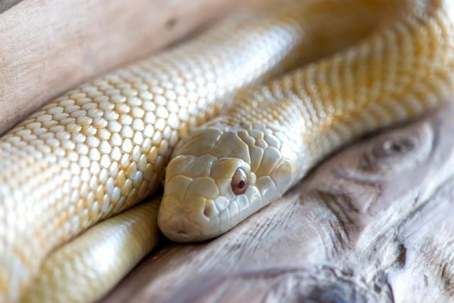 白蛇が出てくる夢を見た!夢診断でわかるあなたの深層心理