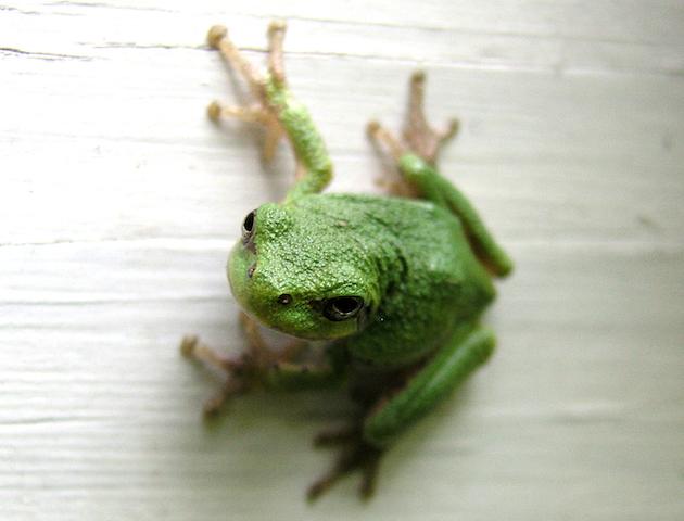 夢占いでカエルを象徴するものは?夢が導く7つの教え