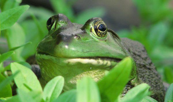 【夢占い】カエルは幸運の兆し!夢を生かす方法とは?