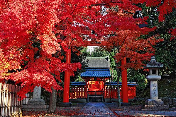 嵐山をじっくり観光☆自然の魅力を感じる見どころ情報!
