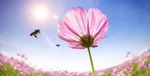 夢占いで蜂が暗示するものとは?注意すべき6つのこと