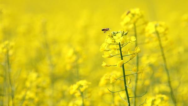 夢占い☆蜂に刺された夢が告げるあなたの精神状態