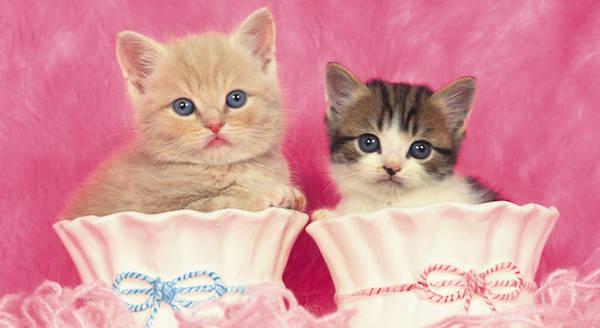『猫』の夢占い☆夢を見たあなたが注意すべき6つのこと