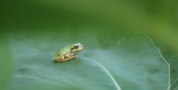 【夢占い】カエルの夢があらわすあなたの未来