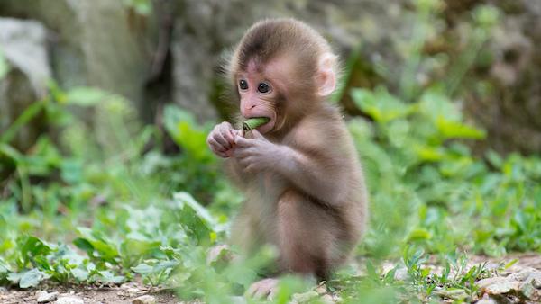 猿夢を見てしまったときにするべき6つの対処法