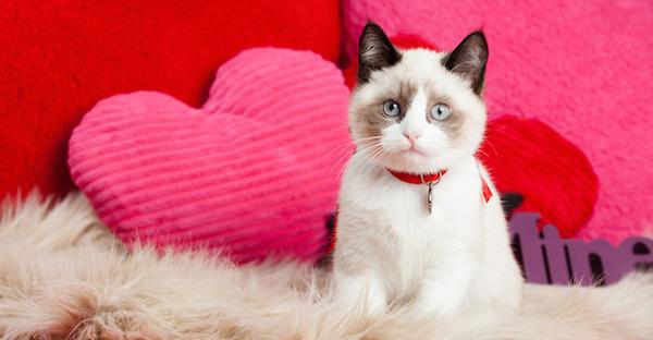 猫は夢占いでトラブルをあらわす?その夢の意味