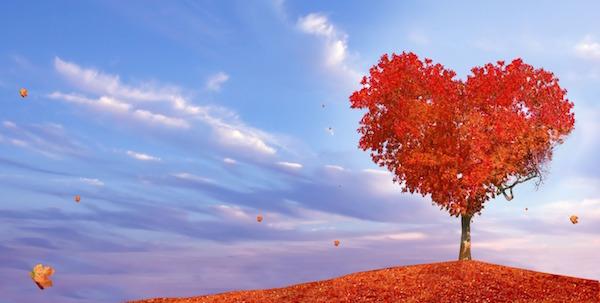 【復縁】願いが叶う待ち受け:愛の実る木