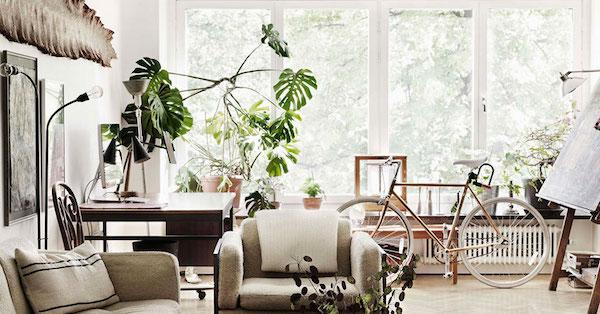 金運アップする観葉植物の置き方・選び方