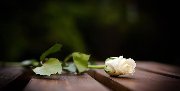 お葬式の夢を見た後に気をつけてほしい5つの事