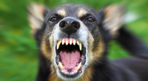 犬に噛まれる夢が意味するあなたの深層心理とは