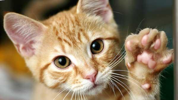 猫の夢を見た後に気をつけてほしい5つの事